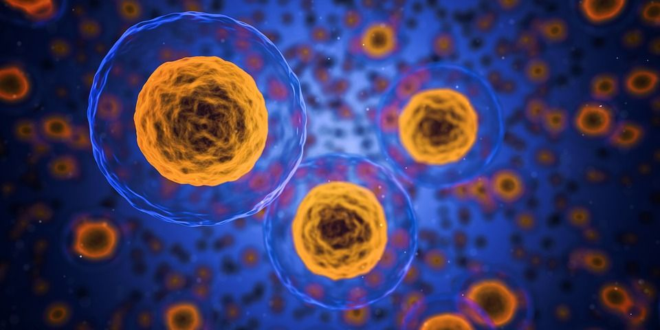 Bioengenheiros programam células para se transformarem em formas 3D